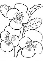 Раскраски Цветы | Цветы, природа, деревья, скачать и ...