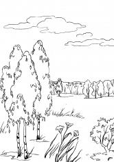 Раскраска Берёзы в поле