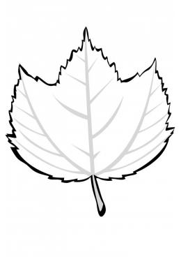 листочки кленовые картинки