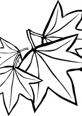 Картинки букет из осенних листьев раскраска