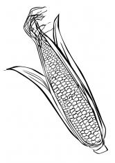 Раскраска Кукуруза