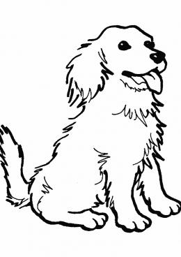 Раскраска Лохматая собака, скачать и распечатать раскраску ...