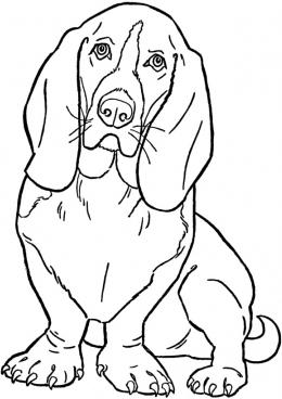 раскраска собака с длинными ушами скачать и распечатать