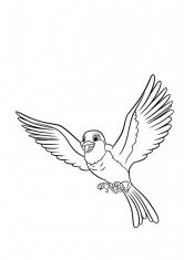 Раскраска Птичка Робин