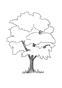 Раскраска Ветвистое дерево, скачать и распечатать ...