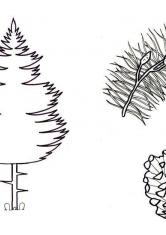 Раскраски Цветы, природа, деревья, скачать и распечатать ...