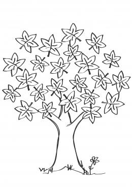 Раскраска Клен с большими листьями, скачать и распечатать ...