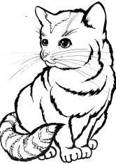 Раскраска Кот в полоску