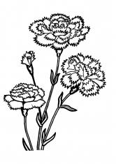 Гладиолусы рисунки
