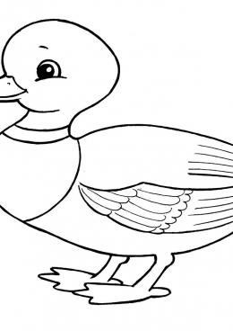 Раскраска Домашняя утка, скачать и распечатать раскраску ...
