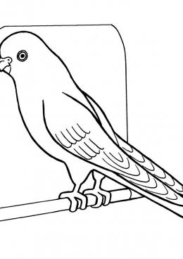 раскраска волнистый попугай скачать и распечатать раскраску