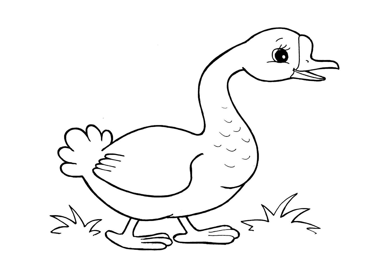 раскраски для детей домашняя птица