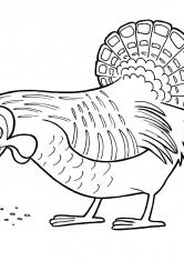 Раскраска Курица собирает зерна