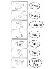 Раскраска Основные части тела на русском