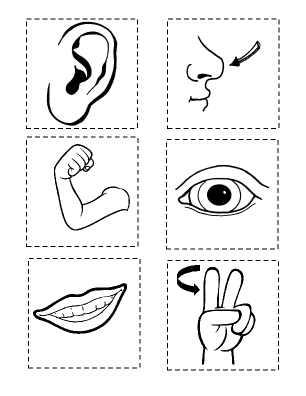 Раскраски для детей тело человека