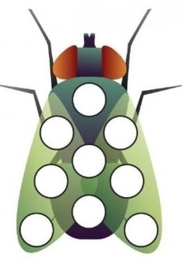 раскраска муха с зелеными крыльями скачать и распечатать