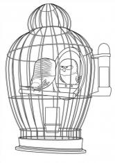 Раскраска Попугай Горошек
