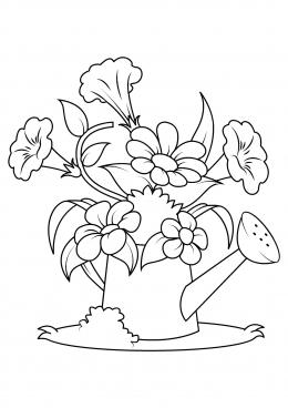 Раскраска Цветы в лейке, скачать и распечатать раскраску ...